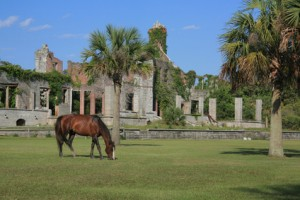 Cumberland-Island-National-Seashore