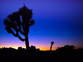 joshua-tree-national-park-california